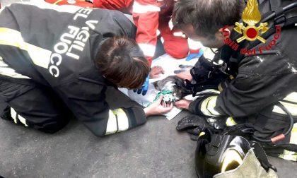 Incendio in casa: pompieri salvano gatto privo di conoscenza FOTO E VIDEO