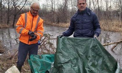 Il sindaco di Ceriano pulisce il Parco delle Groane FOTO