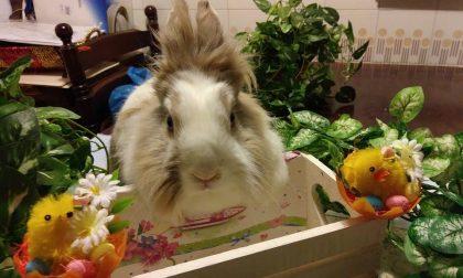 """""""Conigli alla riscossa"""", torna il concorso fotografico Enpa FOTO"""