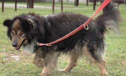 ATS e ENPA Monza, pronto il protocollo per assistere i proprietari di animali in difficoltà