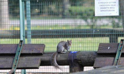 Gli animali si riprendono il Parco - LE FOTO