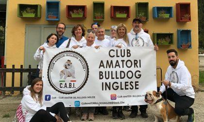 Il raduno dei bulldog di tutta Italia è social