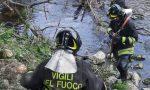 Pianta cade nel torrente a Lentate, intervengono i pompieri FOTO