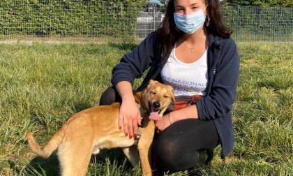 Cucciolo di cane tenuto chiuso in un armadio a Sovico, salvato dall'Enpa FOTO