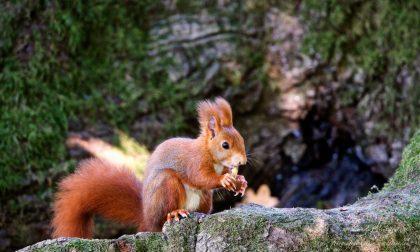 """Riapre il Parco, Enpa avverte: """"Non dare cibo agli animali"""""""