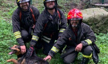 Cane cade nel torrente, salvato dai Vigili del Fuoco