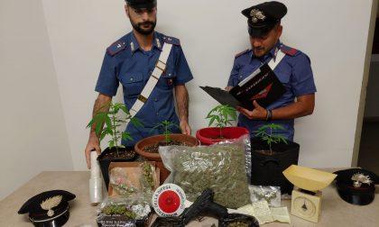 Droga, piantine di marijuana e pistola in casa, arrestato un 20enne a Meda
