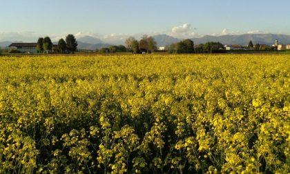 Un invito a rispettare la natura e le coltivazioni