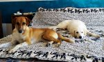 Coppia monzese dona una nuova casa a due cani con un passato difficile