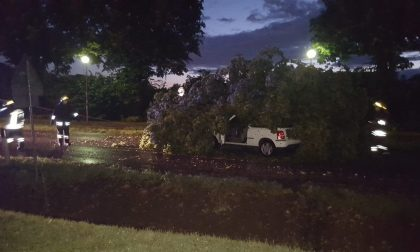 Grosso albero cade su un'automobile in corsa FOTO