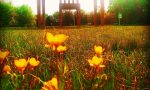 Ecco chi sono i vincitori del Photo Contest Instagram sulle fioriture nel Parco di Monza