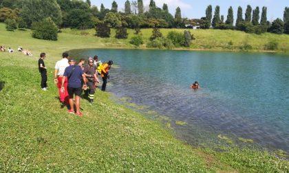 Cane annega mentre sta giocando con il padrone nel laghetto FOTO