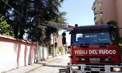 Grosso ramo pericolante, intervento dei Vigili del fuoco – FOTO