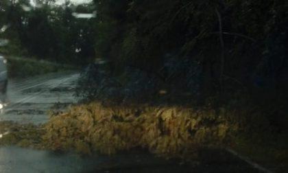 Maltempo, albero si abbatte sulla strada a Meda