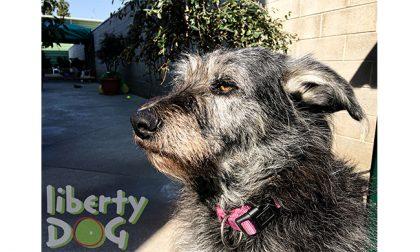 L'asilo per cani Liberty Dog di Concorezzo sempre più attento all'innovazione