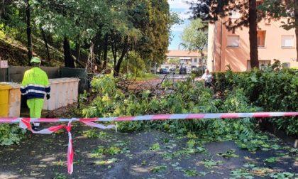 Paura in via Lecco e via Fiume, cadono alberi