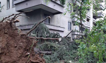 Monza: alberi abbattuti e danni per il maltempo FOTO VIDEO