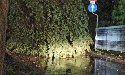 Maltempo nel Vimercatese, forti raffiche di vento e alberi abbattuti VIDEO