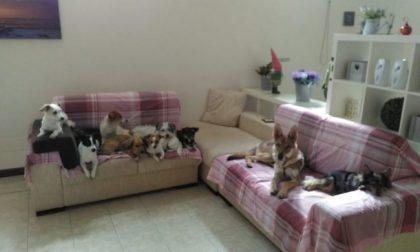 Le tolgono i suoi dieci cani e tre gatti, 46enne pronta a tutto per riaverli