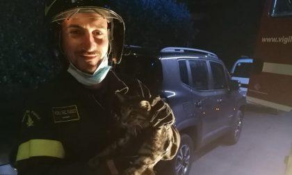 Si accorge di un gatto nel vano motore, i pompieri lo salvano FOTO VIDEO
