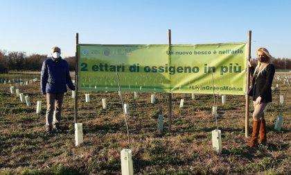 Due ettari di ossigeno in più grazie al nuovo bosco urbano in viale Sant'Anastasia