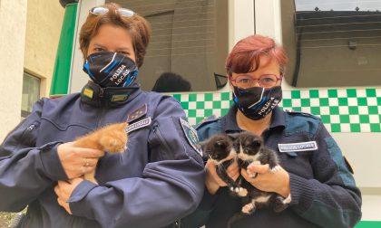 Gattini abbandonati in uno scatolone: salvati (e adottati) dalla Polizia locale