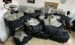 Sequestrati 220 chili di marijuana e hashish. Sui panetti c'era la faccia di Goku