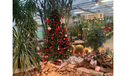 Al Garden Mazzieri è Natale da oggi fino al 31 dicembre