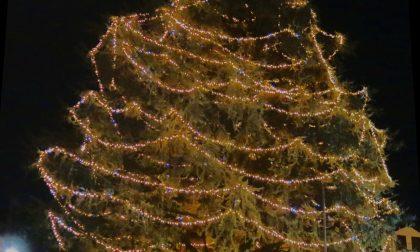 Natale: domani il grande albero si accende… online