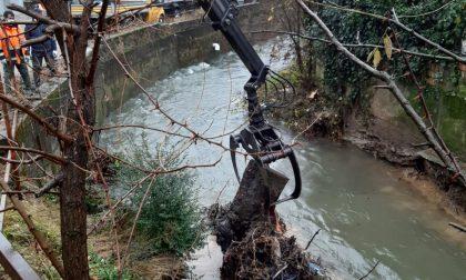 Rimosso un albero caduto nel Molgora