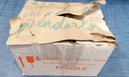 """Abbandonato in uno scatolone con la scritta """"C'è un coniglio chi vuole prenderlo"""". La triste storia di Rudolph"""