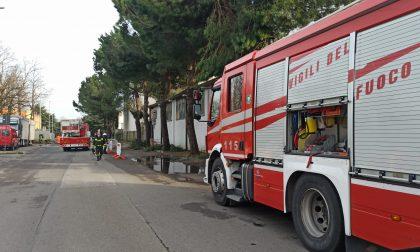 Albero pericolante: l'area in sicurezza grazie ai Vigili del fuoco – FOTO