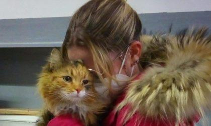 Gattina torna a casa dopo un mese e mezzo