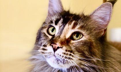 Festa del Gatto: tutte le bellissime foto che ci avete inviato