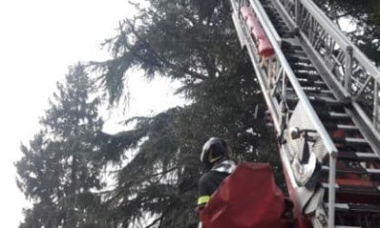 Rami pericolanti in via Boito a Monza: intervengono i Vigili del fuoco