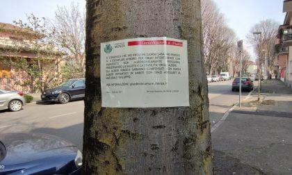 "Sollevano i marciapiedi ""condannati"" due alberi di via Romagna"