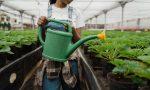 I giovani investono sull'agricoltura: aumentano del 14% gli imprenditori under 35