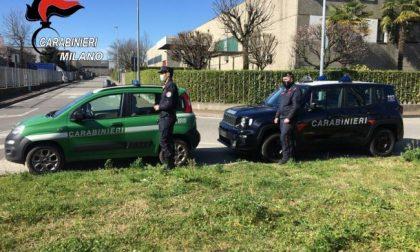 I Carabinieri soccorrono cinque gabbiani feriti