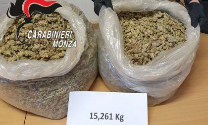 Nascondono 15 chili di marijuana sotto un albero in un parco: nei guai due 20enni