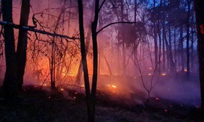 Grosso incendio nel Parco delle Groane in fumo 40 mila metri quadri