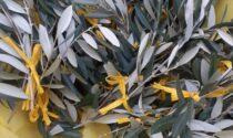 Dai carcerati ramoscelli d'ulivo in dono alla casa di riposo di Meda