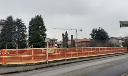 Legambiente chiede un regolamento per il verde privato e il censimento degli alberi monumentali