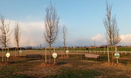 """""""Un albero per ogni classe"""" lungo il sentiero delle Moiacche"""