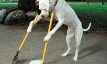 Lancia le feci del suo cane sul tetto del porticato di un palazzo: rischia una denuncia