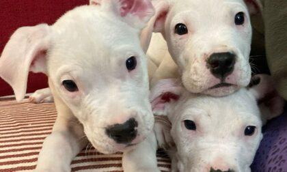 I piccoli di dogo crescono: presto le adozioni