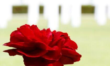 25 Aprile 2021: un fiore per ricordare chi si è battuto per la libertà