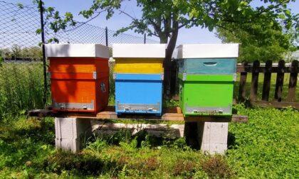Nell'Oasi di biodiversità a Monza arriva un nuovo alveare