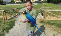 Il pappagallo Alex fa impazzire Roncello