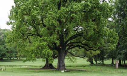 Un weekend con il Fai alla scoperta degli alberi monumentali e delle serre di agrumi nei Giardini reali