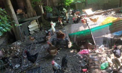 Muore e in casa sua trovano... 70 animali e scheletri